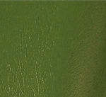 Solano Olive Green